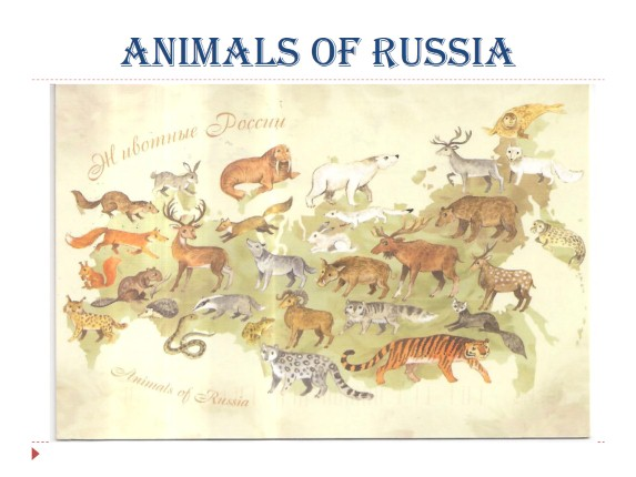Animals of Russia