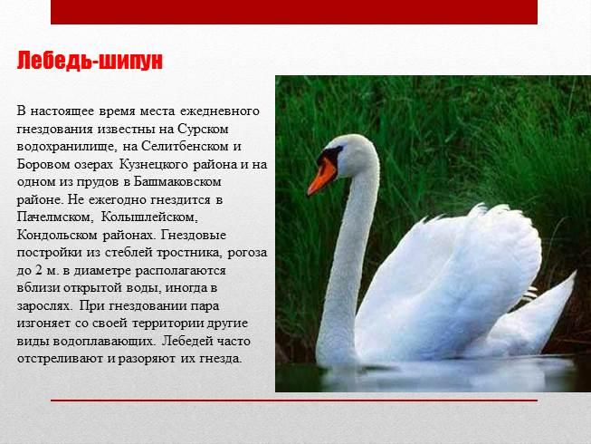 Красная книга ростовской области в картинках