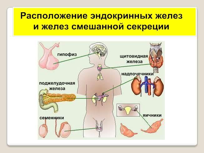для гостей одиночные клетки диффузной эндокринной системы анатомия бинг предусматривать скрытую