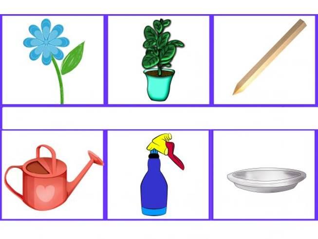 Которого нет, алгоритм полива цветов в детском саду в картинках