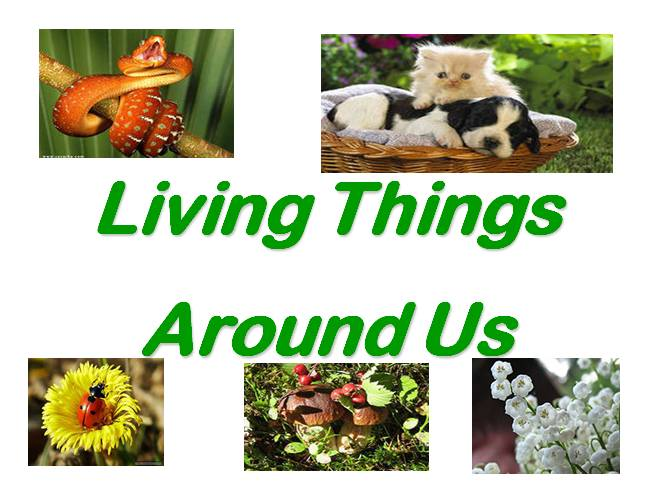 Living things around us