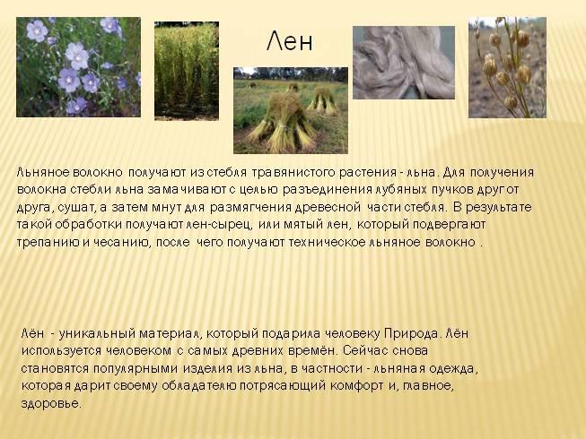 Особенности выращивания льна-долгунца 61