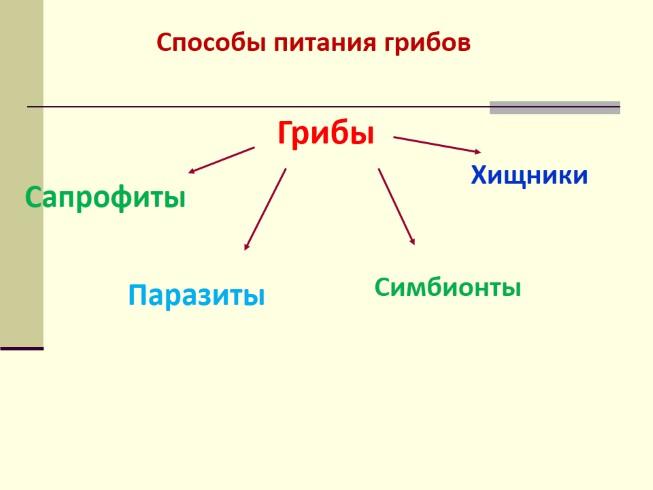 тмин от паразитов в организме человека