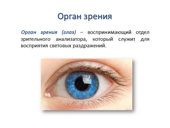 Презентацию на тему орган зрения