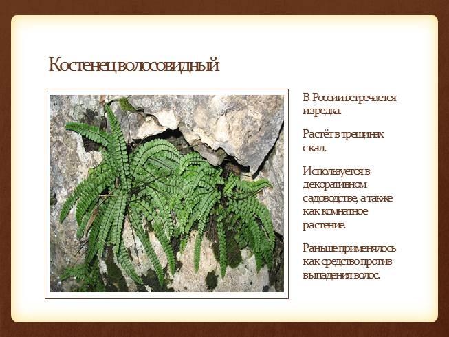 монеты россии 1993 года стоимость каталог цены