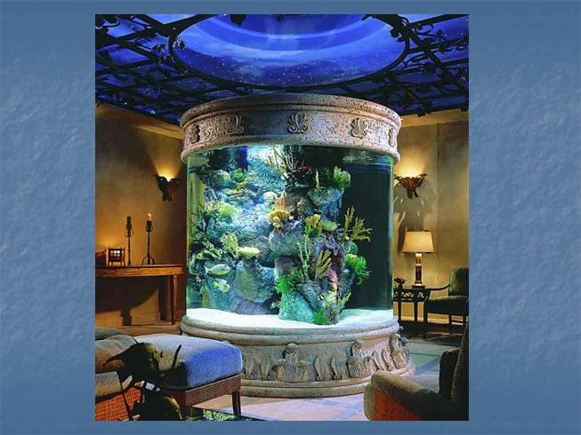 Как сделать красивый интерьер в аквариуме - Первая школа Юла