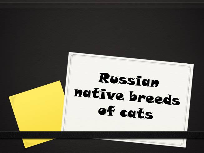 Russian native breeds of cats