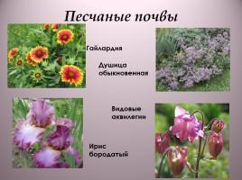 какие цветы любят песчаную почву с фото связывается различными событиями