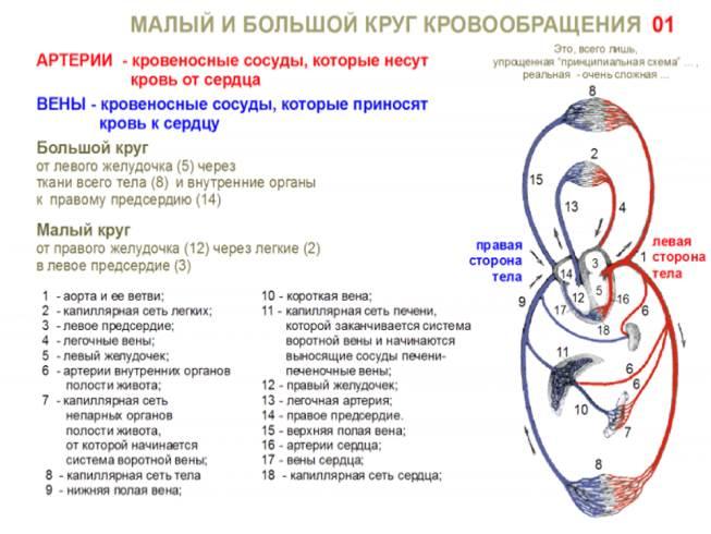 Лечение простатита хирургическим путем