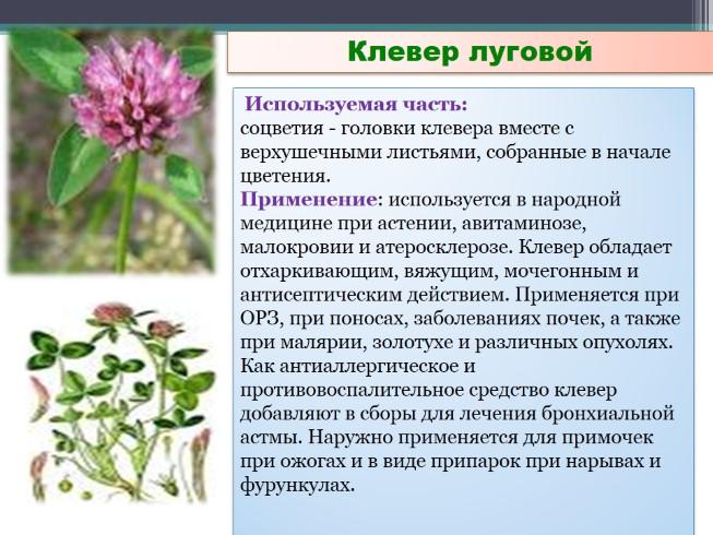 Лекарственные Растения Луга