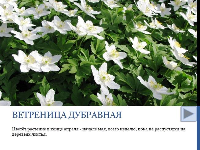 белые цветы в конце мая