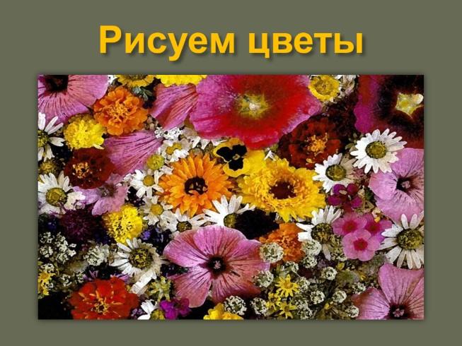 Ноготков цветки их польза