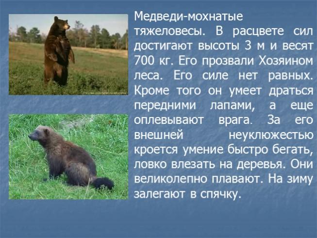 Презентацию на тему животные тайги