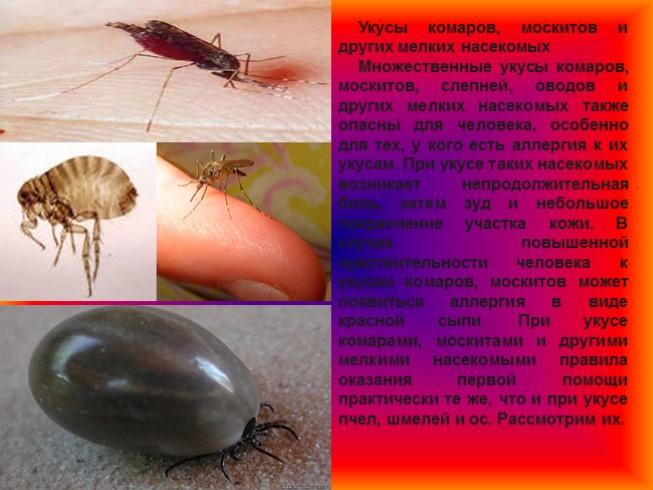 Укус насекомого во время беременности