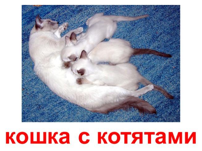 Домашняя питомица со своими котятами, посетившая в сновидении человека, может быть знаком того, что в жизни в скором времени настанет благоприятная череда событий, но это только в том случае, если именно приснившаяся кошка является матерью котят.