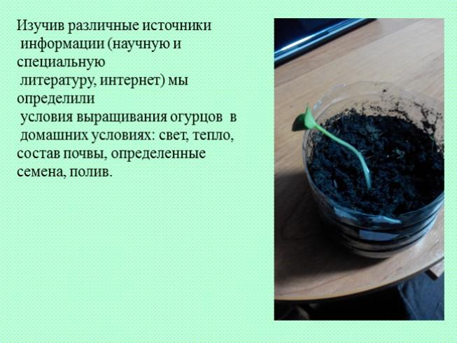 Выращивание огурца презентация 19