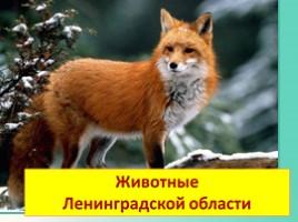 Животные Ленинградской области, слайд 1