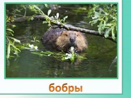 Животные Ленинградской области, слайд 10