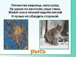 Животные Ленинградской области, слайд 11