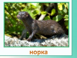 Животные Ленинградской области, слайд 13