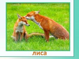 Животные Ленинградской области, слайд 14