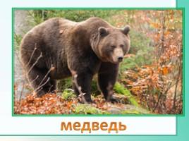 Животные Ленинградской области, слайд 16