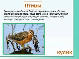 Животные Ленинградской области, слайд 18
