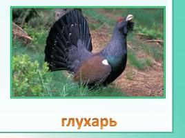 Животные Ленинградской области, слайд 19
