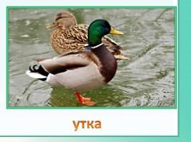Животные Ленинградской области, слайд 23