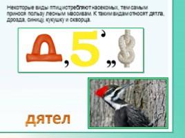 Животные Ленинградской области, слайд 25