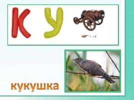 Животные Ленинградской области, слайд 28