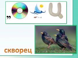 Животные Ленинградской области, слайд 29