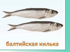 Животные Ленинградской области, слайд 32
