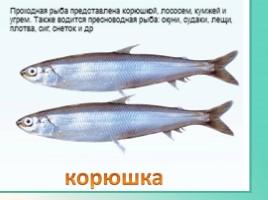 Животные Ленинградской области, слайд 33