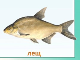 Животные Ленинградской области, слайд 34