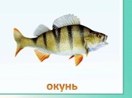 Животные Ленинградской области, слайд 35