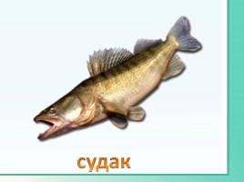 Животные Ленинградской области, слайд 36