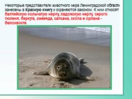 Животные Ленинградской области, слайд 37