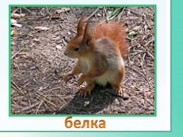 Животные Ленинградской области, слайд 4