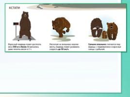 Животные Ленинградской области, слайд 42