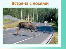 Животные Ленинградской области, слайд 43