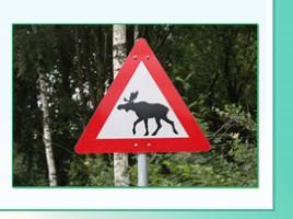 Животные Ленинградской области, слайд 44