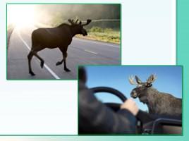 Животные Ленинградской области, слайд 45