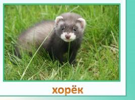 Животные Ленинградской области, слайд 6