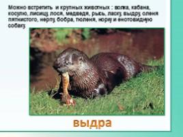 Животные Ленинградской области, слайд 8