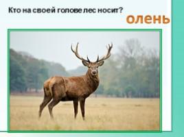 Животные Ленинградской области, слайд 9