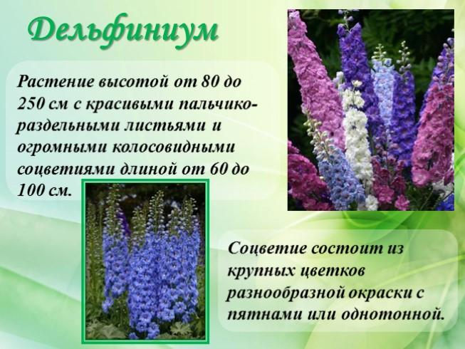 Цветы с колосовидными соцветиями и