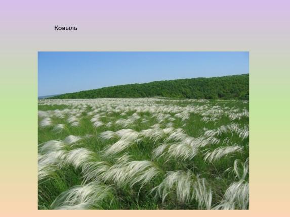 растения краснодарского края названия и фото