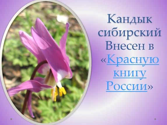 растительный мир красноярского края презентация