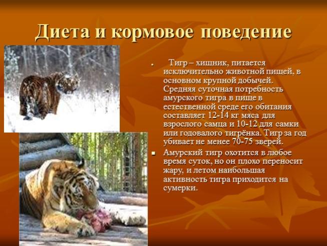 описание характера деревянного тигра схема